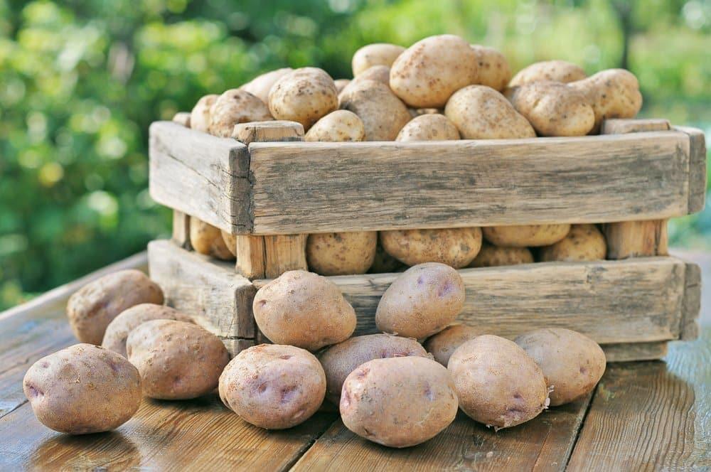Kartoffeln für die elektrische Kartoffelreibe