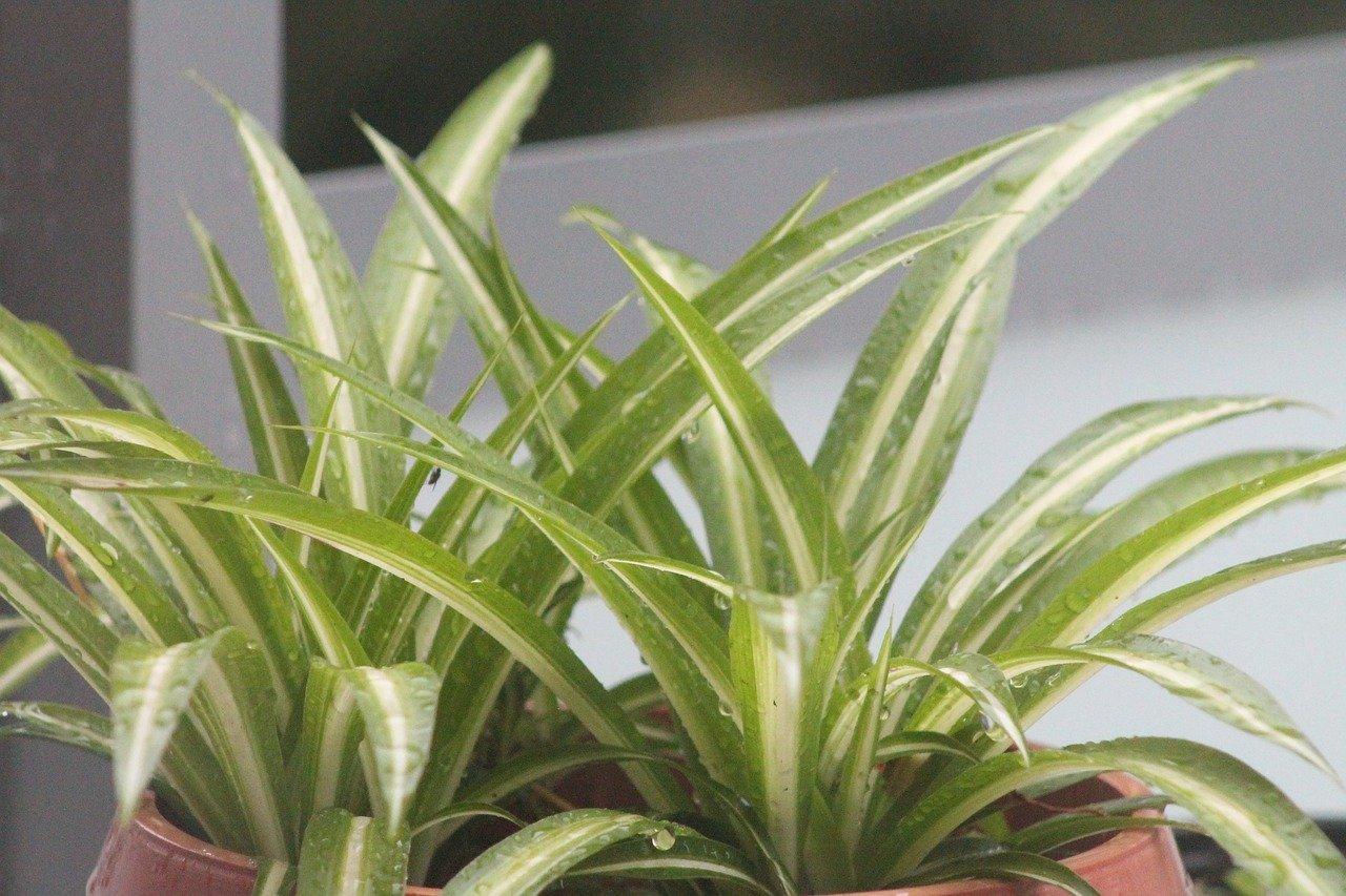 Zimmerpflanzen gegen trockene Heizungsluft