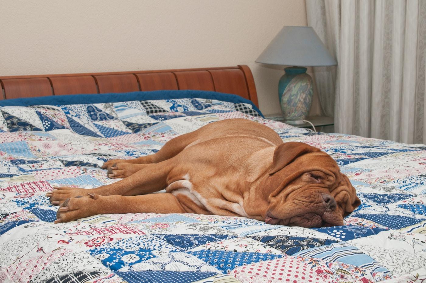 Ein Hund liegt auf einer Patchwork Decke auf dem Bett